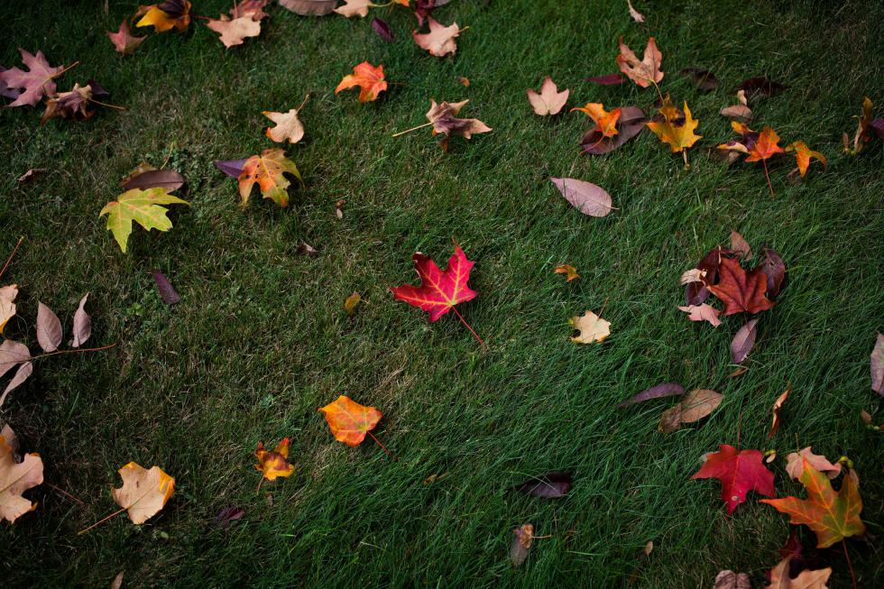 Leaves are beautiful (well, some of them) but our climate future isn't