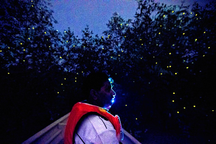 Are firefly populations crashing? We don't know – but that doesn't mean we shouldn't worry