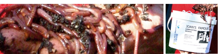 Tuesday at Science Cafe Concord: Rotting garbage plus worms is awesome!