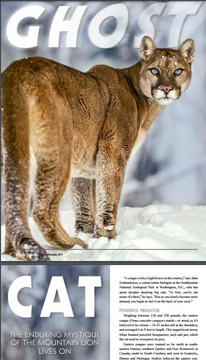 The cougar is extinct, long live the cougar! Granite Geek