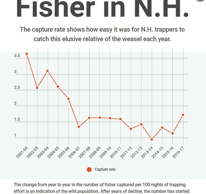 We love fishers in New Hampshire – we just don't know how many there are