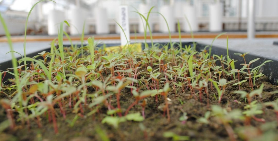 We have more weeds in our future (sorry, organic farmers)