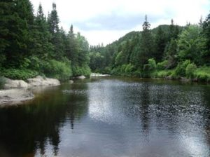 Stream from Dartmouth's Second College Grant in the Dead Diamond River Watershed. Photo: Lauren Culler