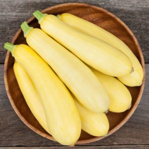 Smooth Operator (cue Sade) is a new yellow straight neck summer squash variety with reduced spines. Credit: High Mowing Organic Seeds