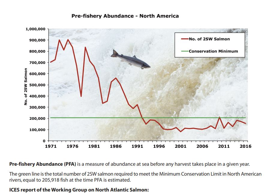 The number of Atlantic salmon returning to N.E./Canada rivers fell 15% last year