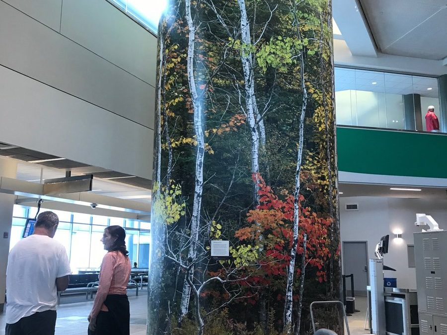 There's celebration of the state tree at our airport, but (oops), wrong tree