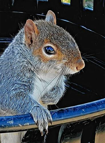 From fruit thieves to road kill, those $%^#! squirrels are everywhere