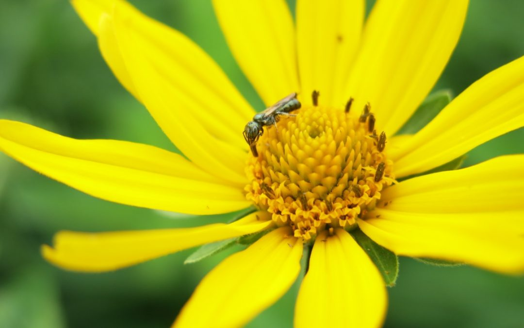 Pollinator gardens are a hot topic