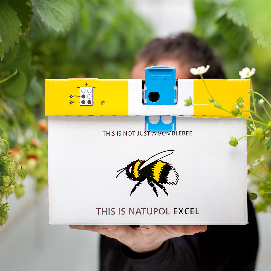 You can order everything else online , so why not a box of bumblebees ?