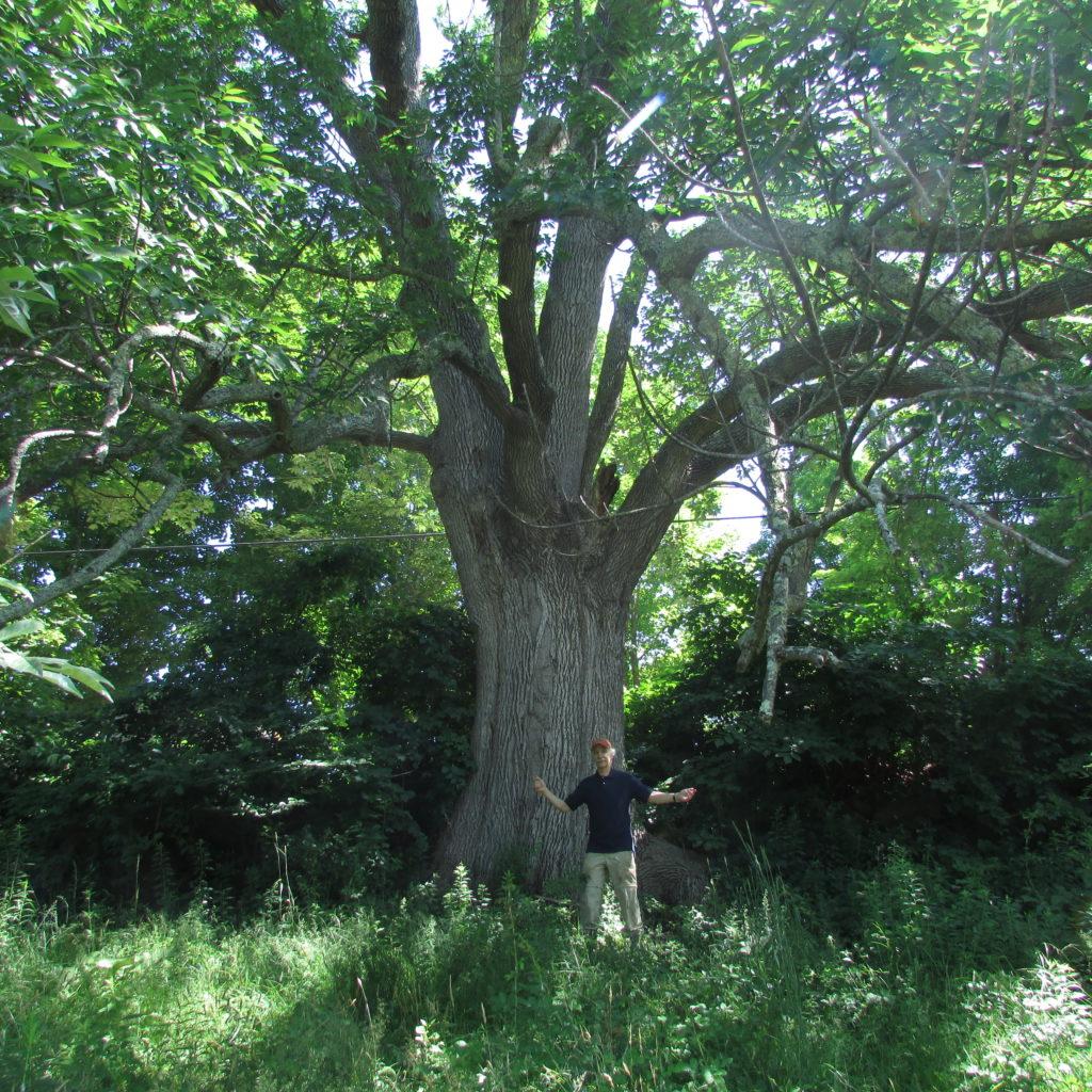 Me and giant ash tree