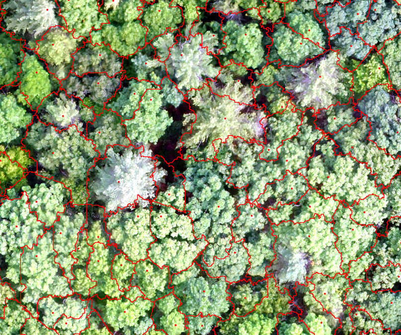 UNH says drones & multispectral pictures *can* see the forest for the trees