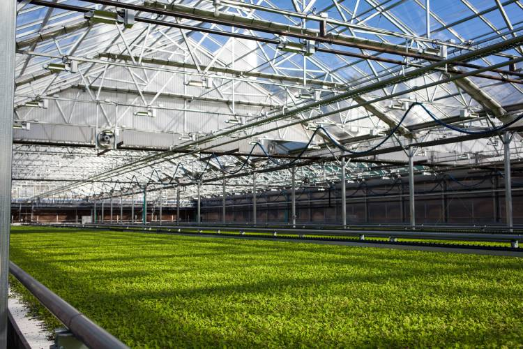Indoor farming for salad greens keeps getting bigger in NH